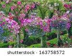Colorful Petunia Planters In...