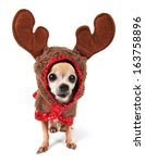A Cute Chihuahua In A Reindeer...