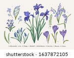 set with blue flowers. spring... | Shutterstock .eps vector #1637872105