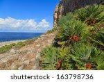 A Closeup Of A Cactus Near The...
