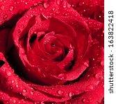 Beautiful Red Rose In Dew Drop...