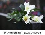 White Lilies On Black Granite...