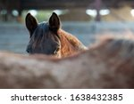 Brown Horse Mare On The Farm ...