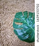Small photo of Monstera is a genus of flowering plants. There are about 60 species in the genus. The genus belongs to the family Araceae. Originally, the plants occur in the tropical regions of Central America