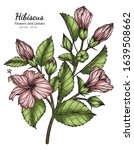 pink hibiscus flower and leaf... | Shutterstock .eps vector #1639508662