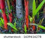 red bamboo tree grass bright... | Shutterstock . vector #1639616278