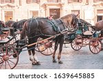 Horse Carriage Waits For...
