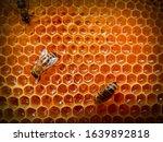 bee on honeycombs with honey... | Shutterstock . vector #1639892818