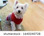 Cute White Fluffy Westie Dog ...