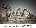 beautiful background of joshua...   Shutterstock . vector #164027726