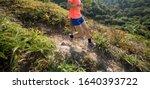 Woman Trail Runner Running...