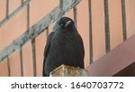 A Jackdaw That Sits On Top Of ...
