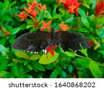 Black Butterfly With Incomplet...