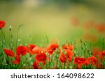 Field Of Bright Red Corn Poppy...
