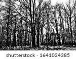 grunge texture of an autumn... | Shutterstock .eps vector #1641024385
