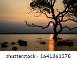 Tree silhouette in the water at sunset