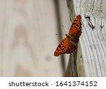 Beautiful Little Orange...