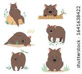 set of wombats in different... | Shutterstock .eps vector #1641638422