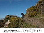 Black Schnoodle Dog On A Track...