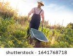 Young Male Farmer Pushing...