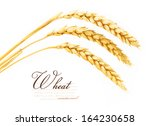spikelets of wheat. isolated on ... | Shutterstock . vector #164230658
