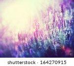 Lavender. Beautiful Lavender...
