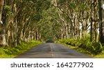 Eucalyptus Tree Tunnel  Koloa...