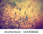 autumn vintage  background with ... | Shutterstock . vector #164308682