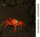 Red Crab On The Shoreline Of...