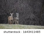 Siblings From The Deer Herd...