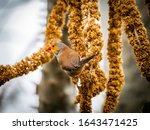 Brown And Orange Bird On Seeds
