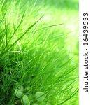 grass   dew | Shutterstock . vector #16439533