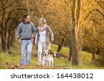 Stock photo senior couple walking their beagle dog in autumn countryside 164438012