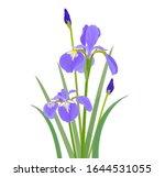 Blue Flowering Asian Iris. ...
