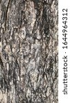 wood surface of old tree. crack ...   Shutterstock . vector #1644964312