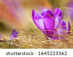 spring background   view of the ... | Shutterstock . vector #1645223362