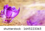 spring background   view of the ... | Shutterstock . vector #1645223365