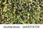 plastic green leaves. design...   Shutterstock . vector #1645576735