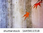 Two red maple leaves protrude...