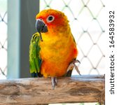 Colorful Parrot Bird Sitting O...
