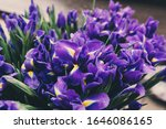purple iris flowers bouquets... | Shutterstock . vector #1646086165