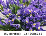 purple iris flowers bouquets... | Shutterstock . vector #1646086168