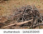 Heap Of Cut Twigs And Branches...