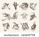 Head Of Farm Animals. Set...