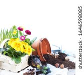 Small photo of Gardening in spring with spring flowers and garden tools, isolated