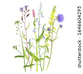 bouguet with wild plants and... | Shutterstock . vector #1646604295