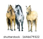 Watercolor Cute Thee Horses On...