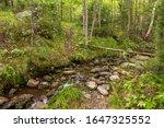 A Small Stream Crosses The...