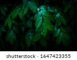 Beautiful Green Leaf After The...