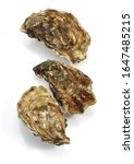 Small photo of French Oyster Called Marennes d'Oleron, ostrea edulis, Seafoods against White Background 065173 Gerard LACZ Images